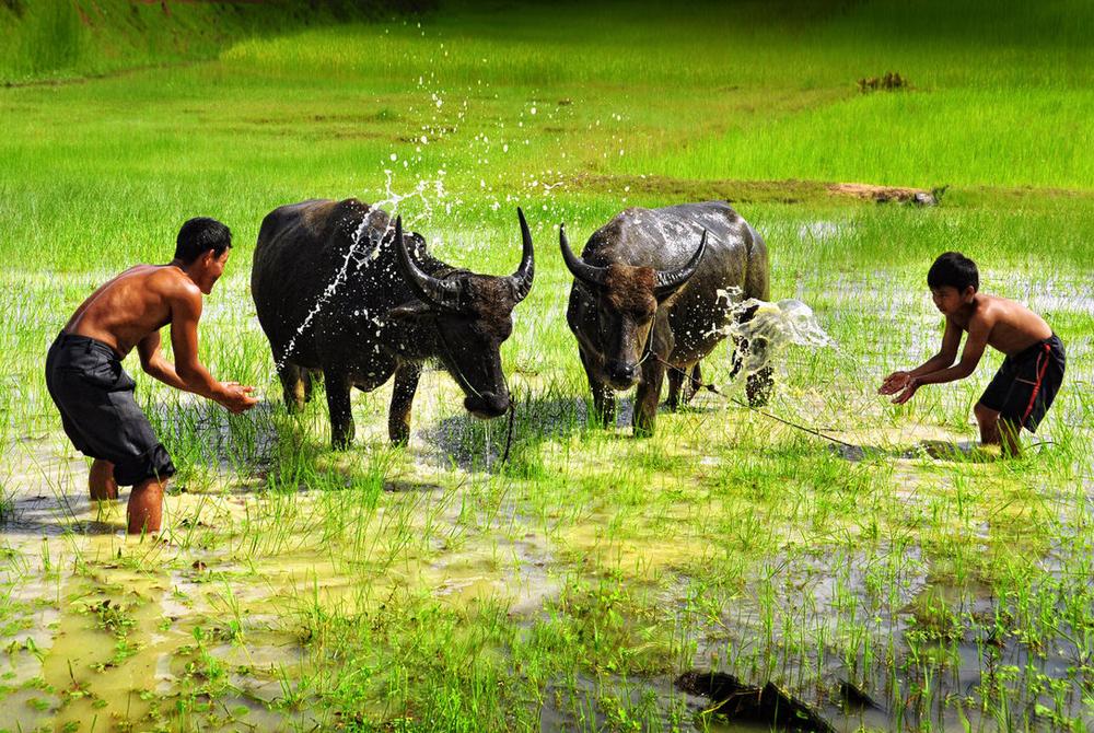 Kelionė į Kambodžą (egzotinės kelionės) 01