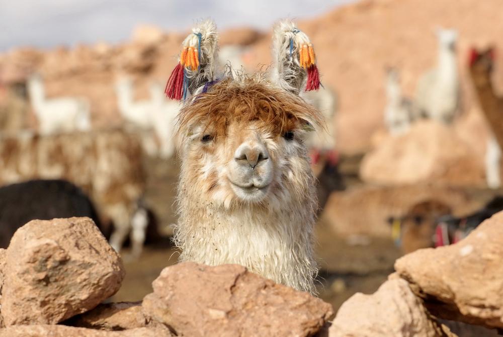 Kelionė į Boliviją (egzotinės kelionės) 10