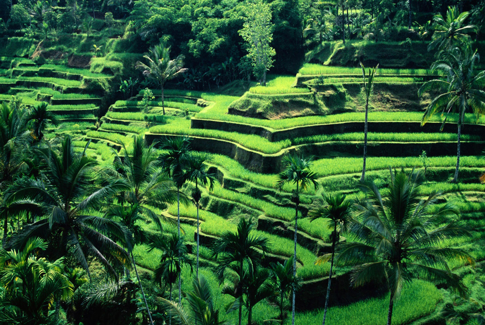 Kelionė į Indoneziją (egzotinės kelionės) 1