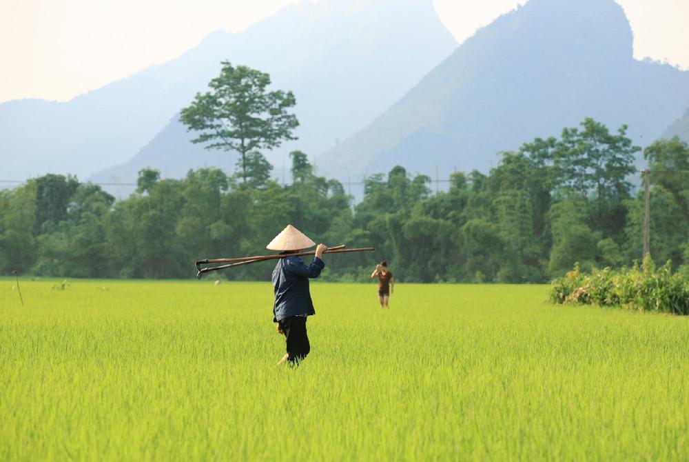 Kelionė į Vietnamą (egzotinės kelionės) 13
