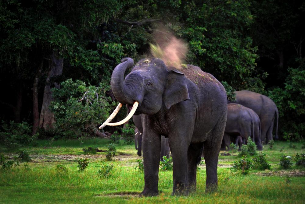 Kelionė į Šri Lanką (egzotinės kelionės) 17