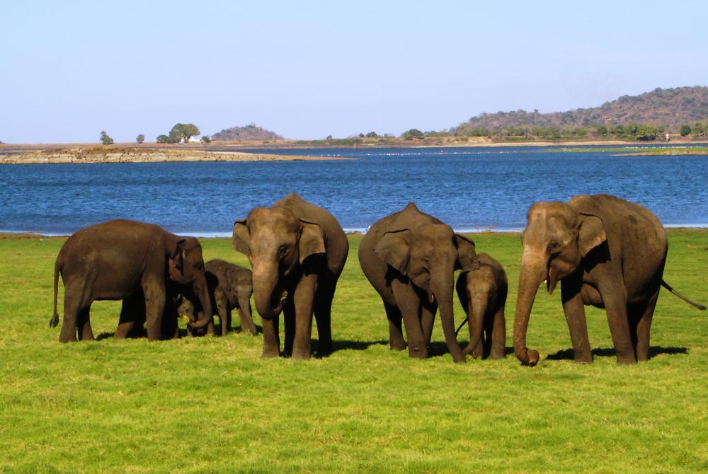 Kelionė į Šri Lanką (egzotinės kelionės) 22