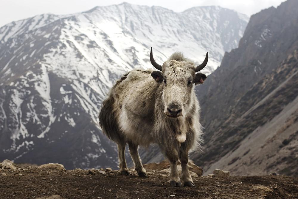 Kelionė į Nepalą ir Butaną (egzotinės kelionės) 27