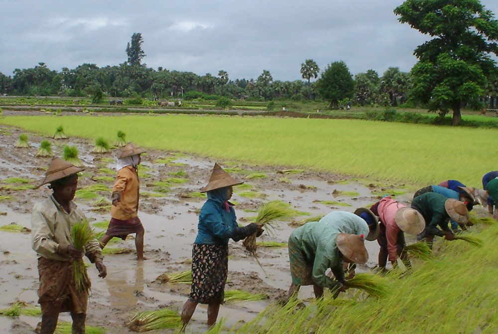 Kelionė į Birmą (egzotinės kelionės) 28