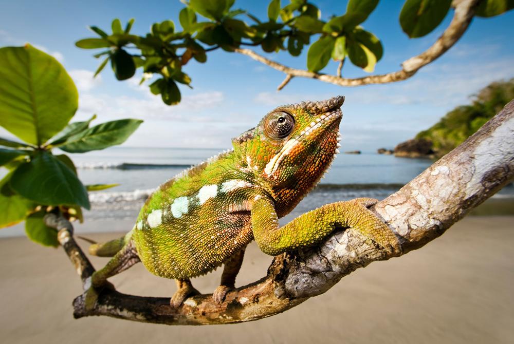 Kelionė į Madagaskarą (egzotinės kelionės) 3