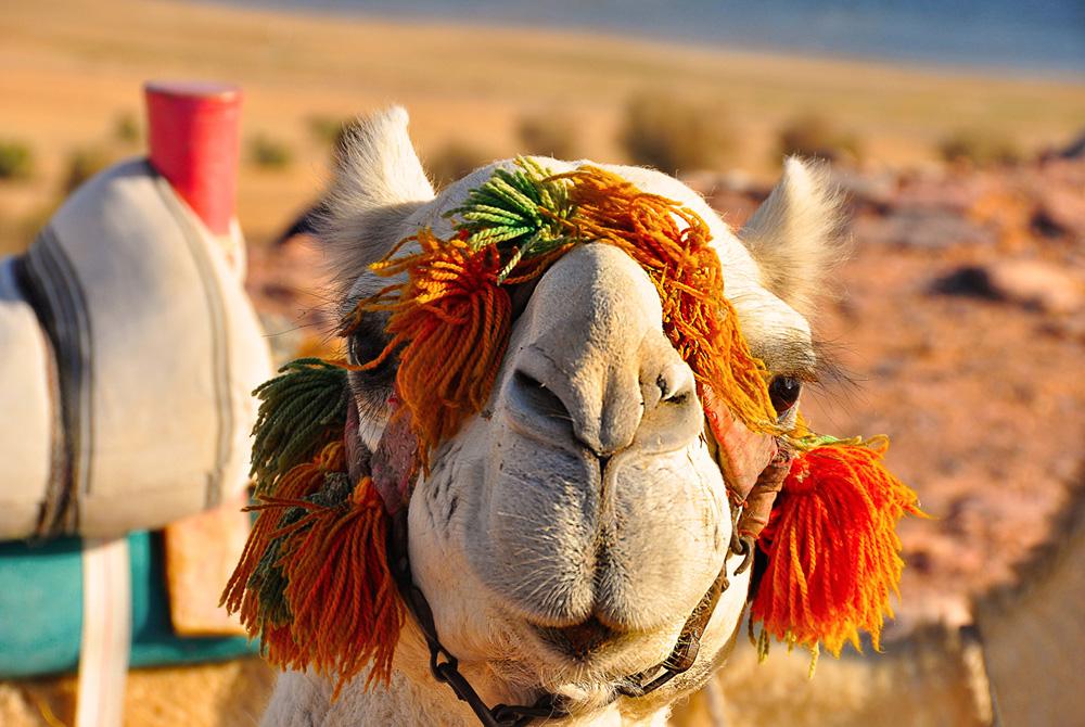 Kelionė į Egiptą (egzotinės kelionės) 34