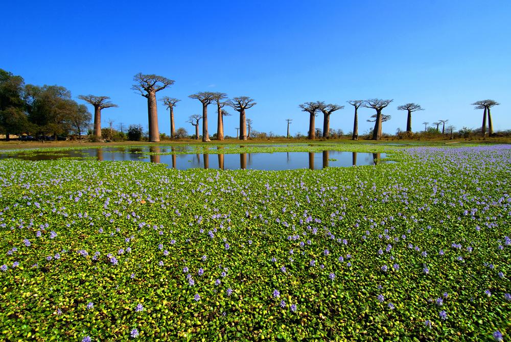 Kelionė į Madagaskarą (egzotinės kelionės) 4