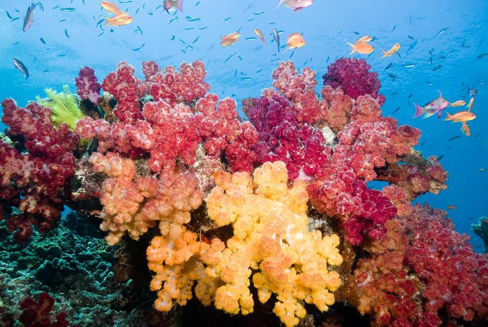 Kelionė į Fidži salą (egzotinės kelionės) 54