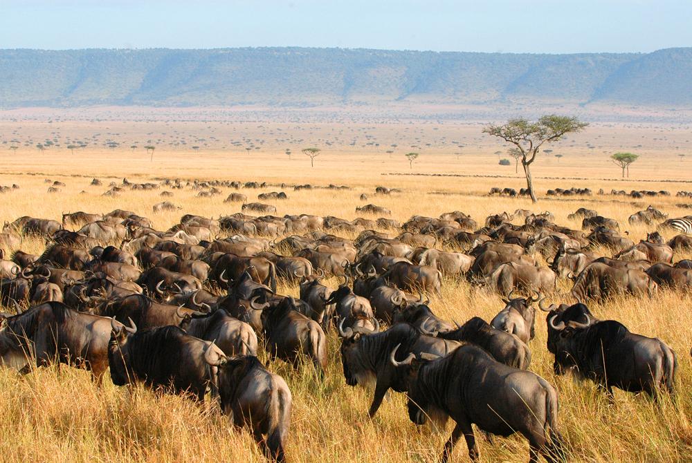 Kelionė į Keniją (egzotinės kelionės) 44