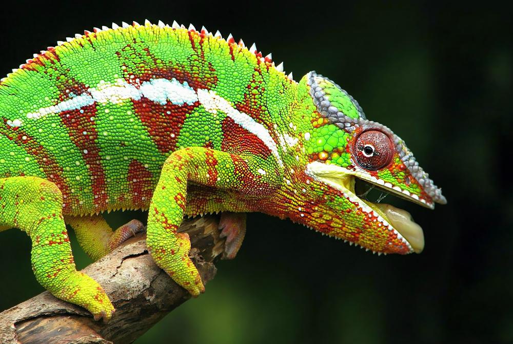 Kelionė į Bora Bora (egzotinės kelionės) 48