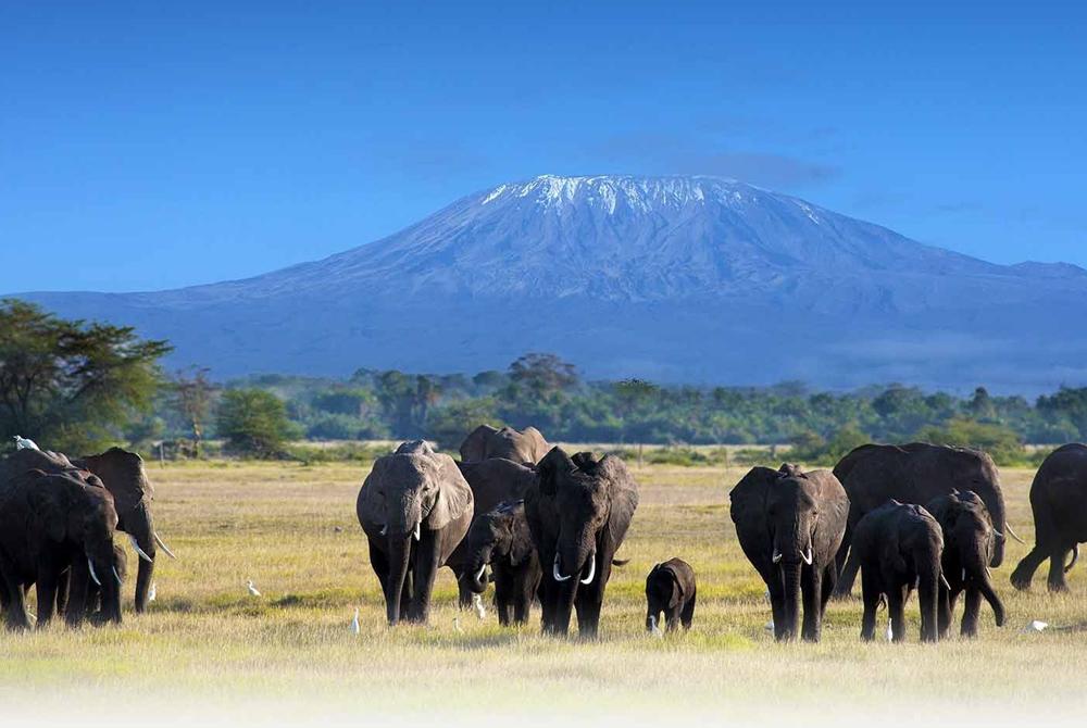 Kelionė į Tanzaniją (egzotinės kelionės) 6
