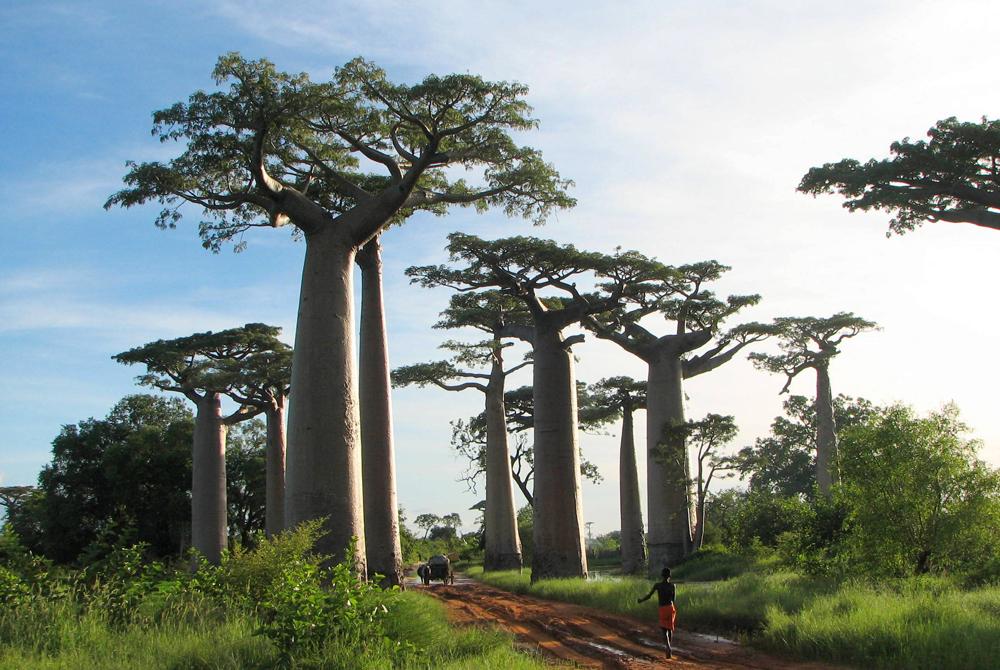 Kelionė į Madagaskarą (egzotinės kelionės) 25