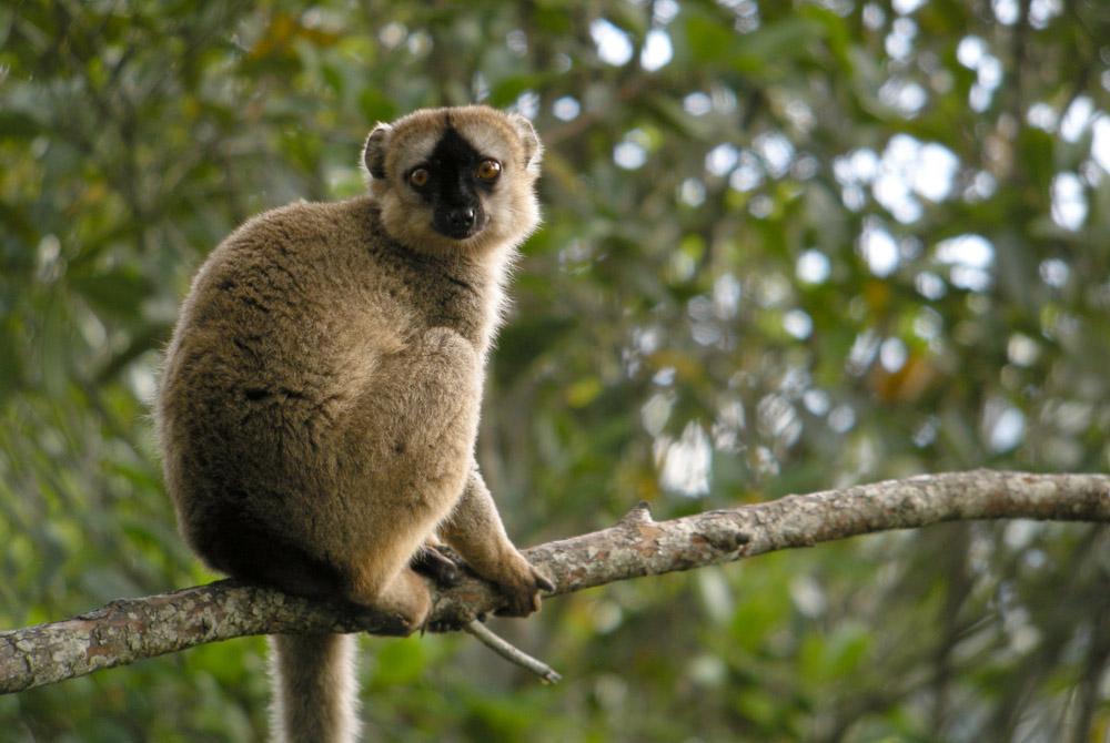 Kelionė į Madagaskarą (egzotinės kelionės) 28