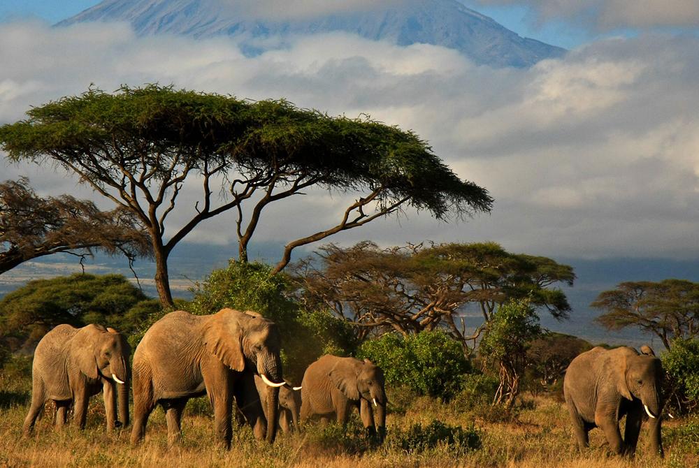 Kelionė į Keniją (egzotinės kelionės) 9