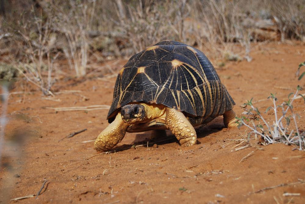 Kelionė į Madagaskarą (egzotinės kelionės) 22