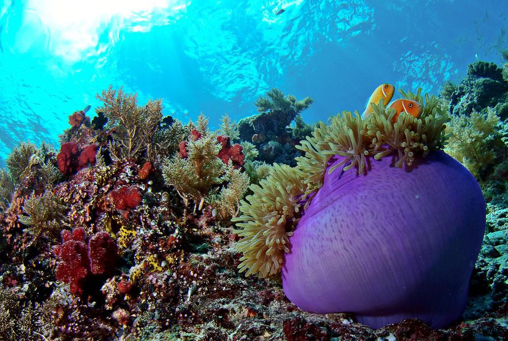Mikronezija (11)