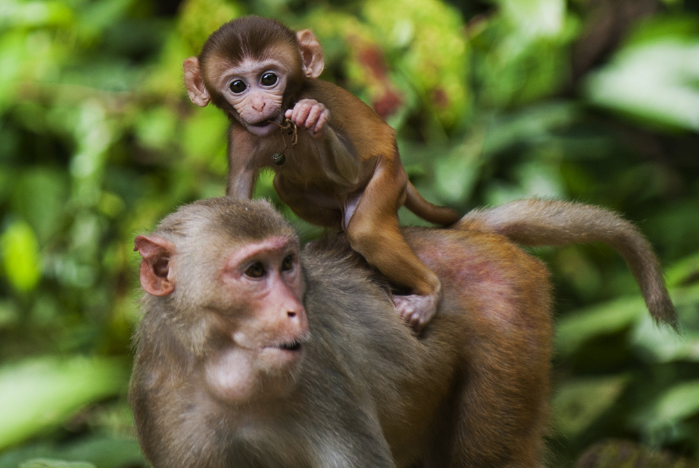 MYANMAR-ANIMAL-ENVIRONMENT